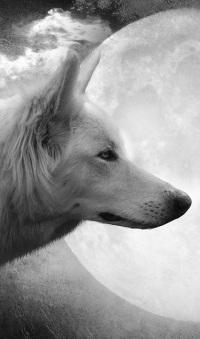 """Der weiße Wolf steht für """"das Gute"""""""