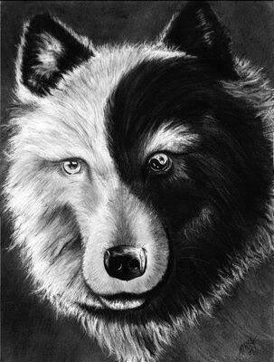 Yin Yang Wolf -  Dut und Böse in einem Wolf vereint